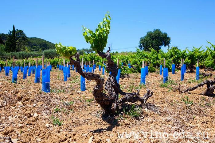 Виноградники Chateau de la Noblesse