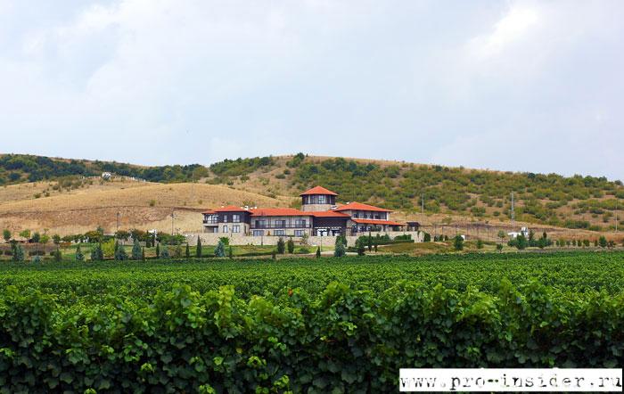 Виноградники винодельни «Братья Минковы»
