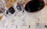Alma Red – первый бокал Riedel для российских вин
