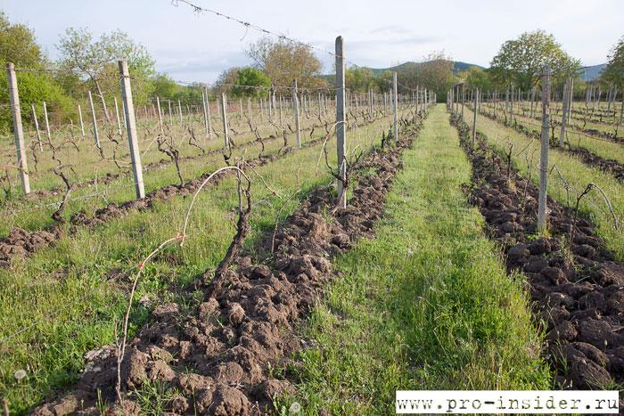 Виноградники Болниси