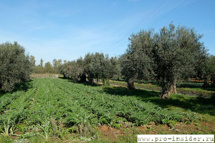 Огород La Parrina