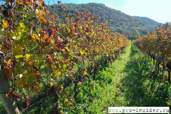 Виноградники La Parrina