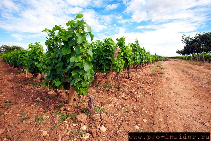 Виноградники в коммуне Жевре-Шамбертен