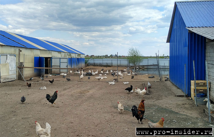 На ферме у Аннушки