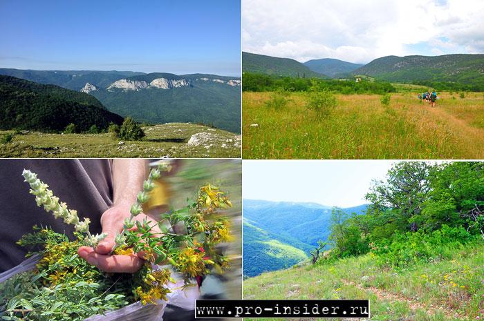 Крымские травы