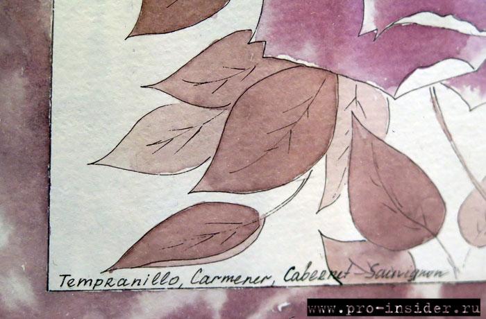 Темпранильо, карменер, каберне совиньон в искусстве