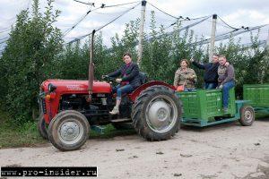 Яблочные плантации Деурич. Сербия